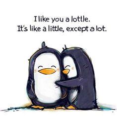 I like you a lottle ;), penguin snuggle!