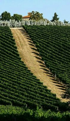Everybody wants to visit the Toscana, Italy. The Tuscany boasts a proud heritage. Toscana, Places To Travel, Places To See, Emilia Romagna, Wine Vineyards, Under The Tuscan Sun, Hotels, Italian Wine, Wanderlust