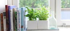 Out of the garden and onto the windowsill: 5 herbs that can grow inside and be used throughout winter