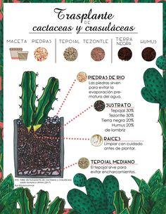 Terrariums, Green Zone, Inside Garden, Herb Garden Design, Cactus Y Suculentas, Green Garden, Botany, Indoor Garden, Cactus Plants