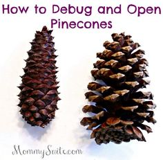 Super easy and effective way to debug and open your pinecones! I wish I knew this a long time ago.