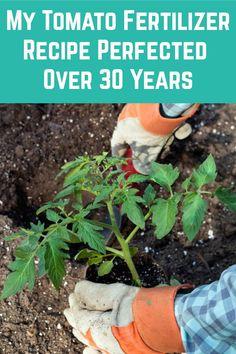 Small Vegetable Gardens, Vegetable Garden Tips, Veg Garden, Tomato Garden, Fruit Garden, Edible Garden, Lawn And Garden, Vegetable Garden Fertilizer, Potager Garden