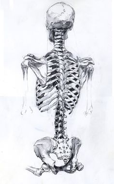 I love the lines of bones. Probably my favorite thing to draw. :)
