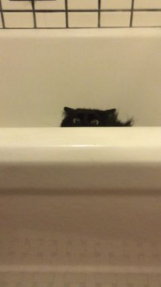 """Good thing I camouflage in with this tub or my human might've just spotted me."" 
