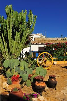 Adding some western elements to your cactus garden can drive home that desert look. A wagon, a wooden well, or some worn pots. Anything distressed, unfinished and old fashioned can conjure images of the American west. Backyard Garden Diy, Diy Garden, Cactus Garden Landscaping, Succulents Garden, Desert Landscaping, Cactus Garden, Cacti And Succulents, Rock Garden, Desert Garden