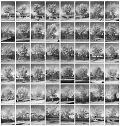 Typology of trees: every Bradford Pear Tree on Freeborn Ave in East Providence, Rhode Island. Photographed by Erik Gould.  via the Typologist.