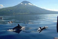 Whale Watching - Sao Miguel - Azores - República Portuguesa