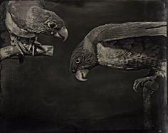 Mary Frey - Imagining Fauna