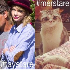 #merstare vs. #taystare Which will you choose? Both are very intimidating, I must say, though. That cat looks pretty freakin' tough from that picture right there, I gotta tell ya.