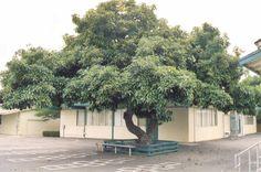 The Garden of Eaden: HOW TO GROW AVOCADO
