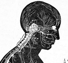Nervous System Human Anatomy Profile View Medical Chart For Framing 1920s