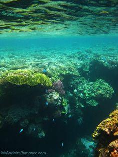 Vanuatu's volcano island: Tanna - the snorkelling there is pretty bloody good!