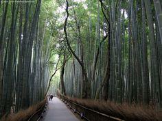 kyoto arashiyama takebayashi dori - bamboo grove