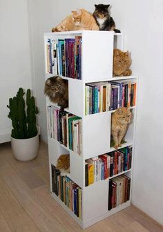 How to organise cats and books at once