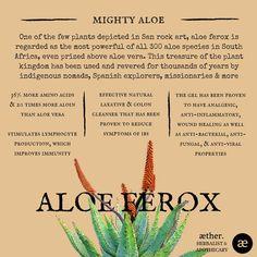 Aloe Ferox Benefits herbal medicine, apothecary, plant medicine, aloe Holistic Remedies, Natural Health Remedies, Holistic Healing, Natural Healing, Herbal Remedies, Healing Herbs, Medicinal Plants, Natural Medicine, Herbal Medicine