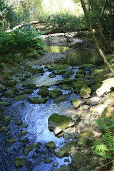 Muir Woods, San Francisco, CA. Copyright Manta Photo Works, LLC