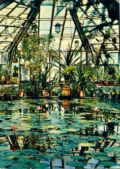 greenhouse with a pond