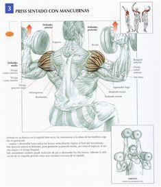 1- ELEVACIONES FRONTALES CON MANCUERNA Este ejercicio trabaja el deltoides y principalmente su haz anterior además del haz clavicular del pectoral mayor y la porción corta del biceps , es un excelente ejercicio para empezar la rutina de hombros e ir calentando...