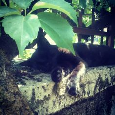 My cat ..