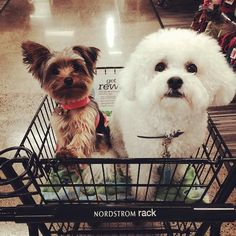 """""""Put your  up if you're #shopping this weekend!  #Regram via @oh_gypsy. #DogsOfInstagram #TGIF"""""""