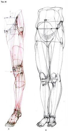 Exceptional Drawing The Human Figure Ideas. Staggering Drawing The Human Figure Ideas. Drawing Legs, Body Drawing, Life Drawing, Drawing Proportions, Drawing Faces, Figure Drawing Reference, Anatomy Reference, Art Reference Poses, Leg Reference