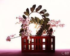 格子の漆器花器に、蘭で色遊びをしました。肉厚なザミアの葉が、その力強い茎のラインとともに、遊び心を高めてくれます。花材:ザミア、胡蝶蘭、オンシジウム(2種) 花器:漆器花器 It's a fun work. The colored columns play with the latticed lacquer vase. The thick Japanese sago palm leaves and powerful stem line further enhance this playful spirit. Material:Japanese sago palm, Moth orchid, Dancinglady orchid Container:Lacquered vase   #ikebana #sogetsu