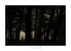 Vincent Munier - Vosges forest - France - September 2014