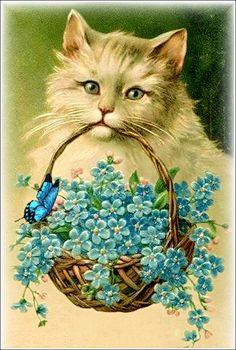 Vintage cat forget-me-nots postcard Vintage Ephemera, Vintage Cards, Vintage Postcards, Vintage Pictures, Vintage Images, Gato Gif, Photo Chat, Cat Cards, Beautiful Cats