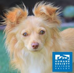 Minnie the mama dog is searching for a home of her own now that all her puppies have been adopted!