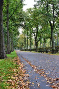 Tiergarten in autumn