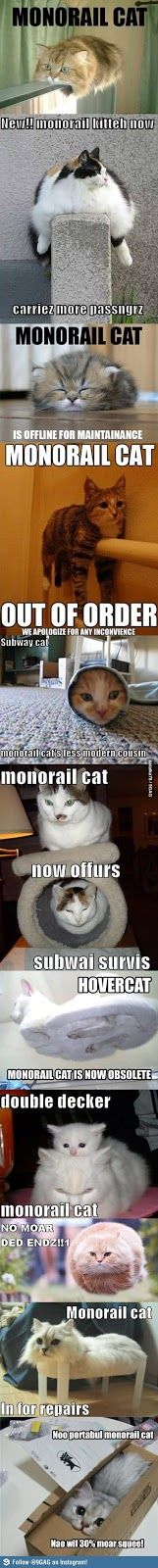 Monorail cats funny meme | Funny weird viral pics