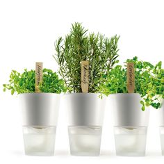 Herbs at your fingertips with self watering pots - eva solo self watering flowerpot