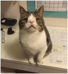 Meet Monty, the cat with down syndrome.