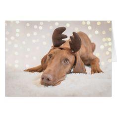 """Xmas Card/Christmas Card Magyar Vizsla """" #cards #christmascard #holiday"""