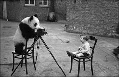 In December 1938, five giant pandas were smuggled out of China to England. Four of them were bought by London Zoo. Photographer Bert Hardy's son, Mike Hardy, poses for a phot with Ming one of the pandas at London Zoo