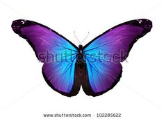 http://image.shutterstock.com/display_pic_with_logo/911323/102285622/stock-photo-violet-butterfly-flying-isolated-on-white-102285622.jpg