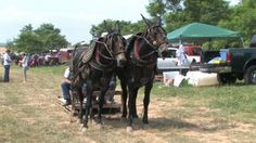 VIDEO. Rush and Jessee Field Day Courtesy: Rural Heritage. Cedar Rapids, IA (USA)