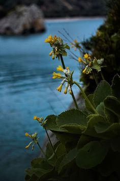 L'Italia è uno dei paesi europei più ricchi di biodiversità, sia animale che vegetale. River, Flowers, Plants, Outdoor, Sea, Italia, Culture, Outdoors, The Ocean