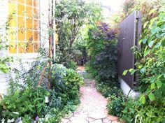 リビングガーデン / 植栽 / メンテナンス Plants / Maintenance