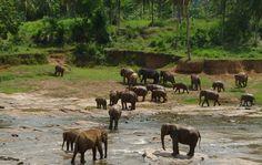 Negombo – Kandy