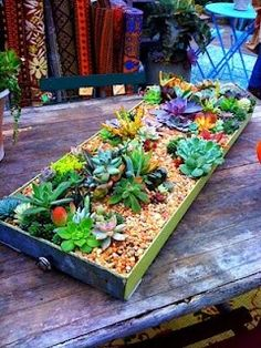 Love this Succulent Garden