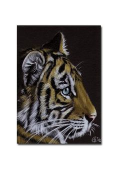 TIGER 40 portrait big cat feline pencil painting Sandrine Curtiss Art Limited Edition Print ACEO by Sandrinesgallery