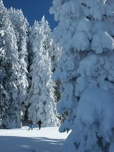 A beautiful ski tour done in Switzerland after heavy snow. This picture was taken close to Glarus.