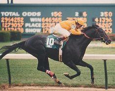 Swale,1984 Kentucky Derby and Belmont Stakes winner.