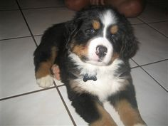 Find out what is America's favorite pet! Vote for my puppy :)