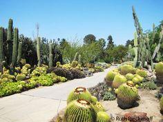 huntington cactus gardens los angeles ca - Google Search