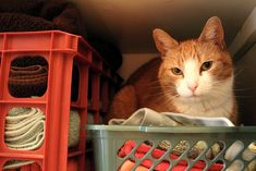 6 Secret Signs of a Sick Cat Sick Cat Symptoms, National Cat Day, Cute Cats And Kittens, Kitty Cats, Cat Signs, Network For Good, Animal Welfare, Plastic Laundry Basket, Cat Life