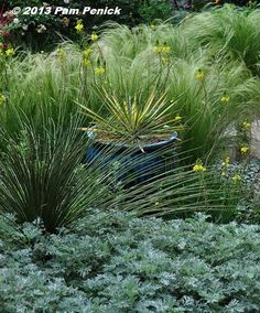 'Powis Castle' artemisia, smooth sotol (I think), yellow bulbine, 'Color Guard' yucca (in the pot), and Mexican feathergrass.