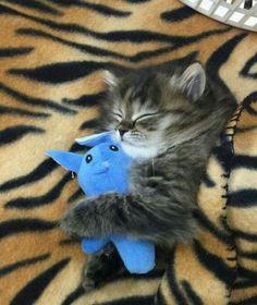 My stuffie...