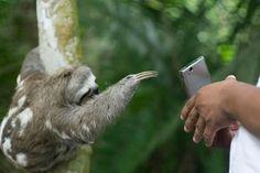 Tour a Tarapoto - Reserva de Animales http://www.tourstierraverde.com/tour-tarapoto/ #tarapoto, #animales